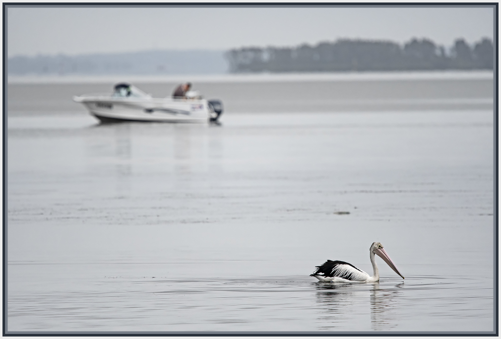 Pelican and a boat