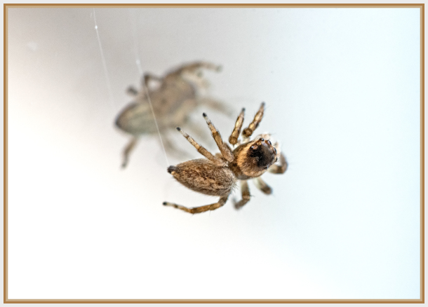 Small spider on mirror