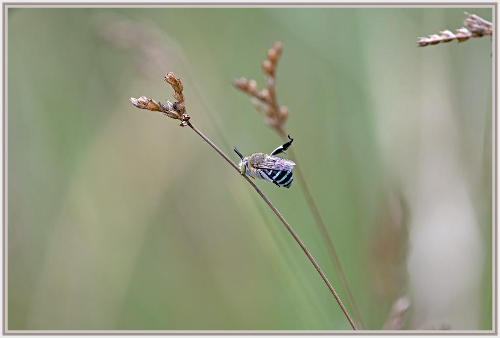 Roosting bee