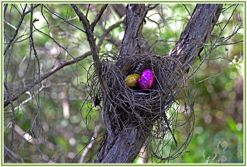 What kinds of birds lay Easter eggs?