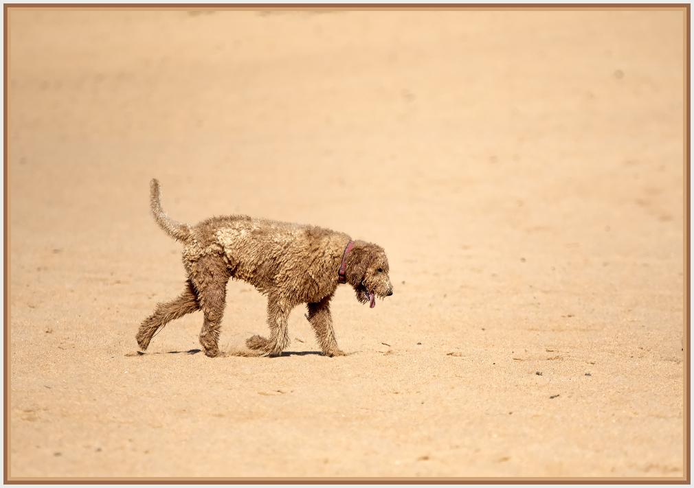 Sandy dog on sandy beach