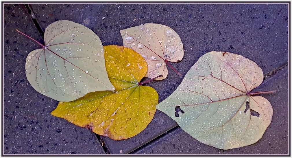 raindrops on falling leaves