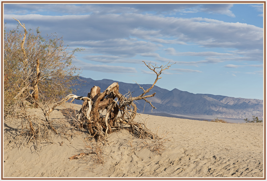 Sand dunes - Death Valley -USA