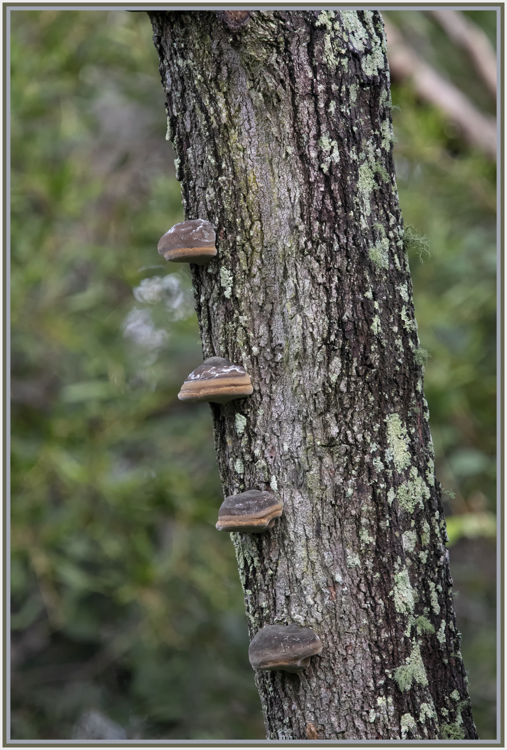 Tree-Dwelling Lichens, fungi and hanging moss