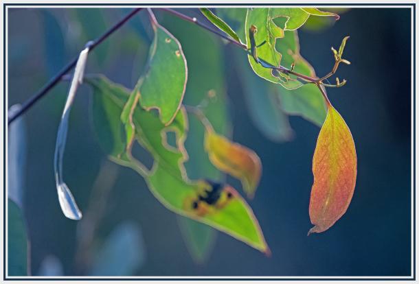 colourful leaf pattern