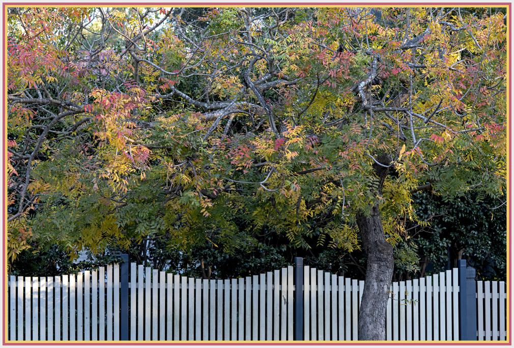 Autumn setset