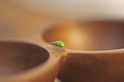 green beetle on wooden containier