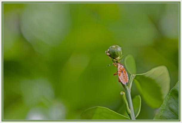Orange bug on orange branch