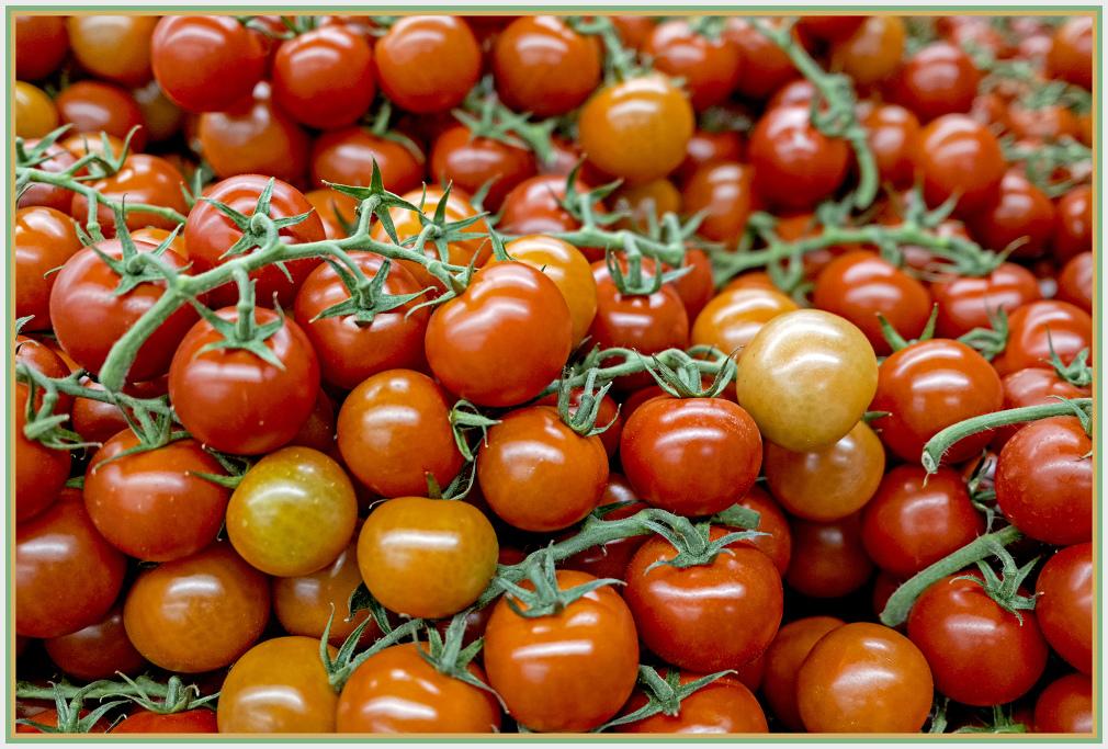 crested tomato