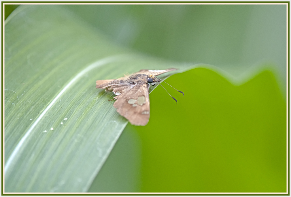 moth on green leaf