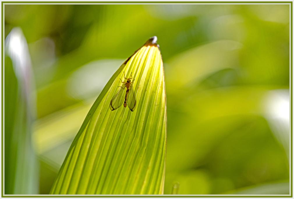 bug on green leaf
