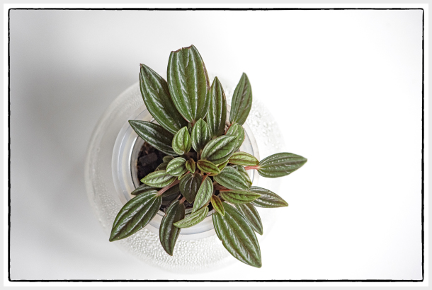 Indoor plant in glass pot