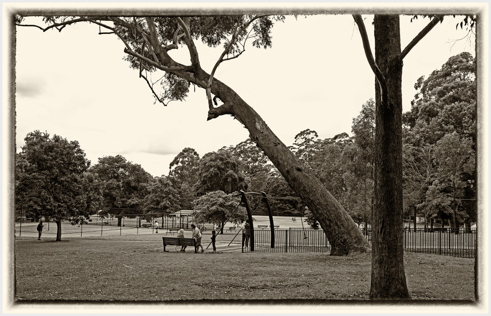 Angled tree in the park