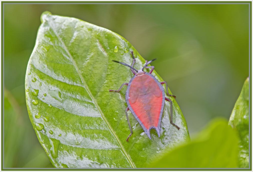 pink bug on green leaf