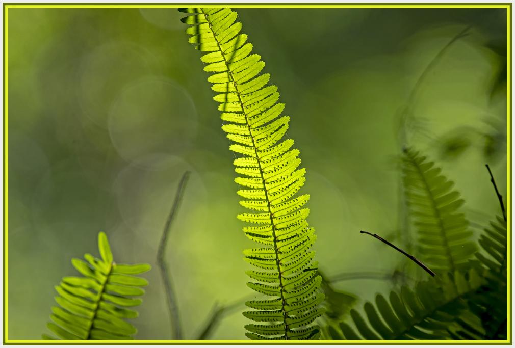 fern in back light