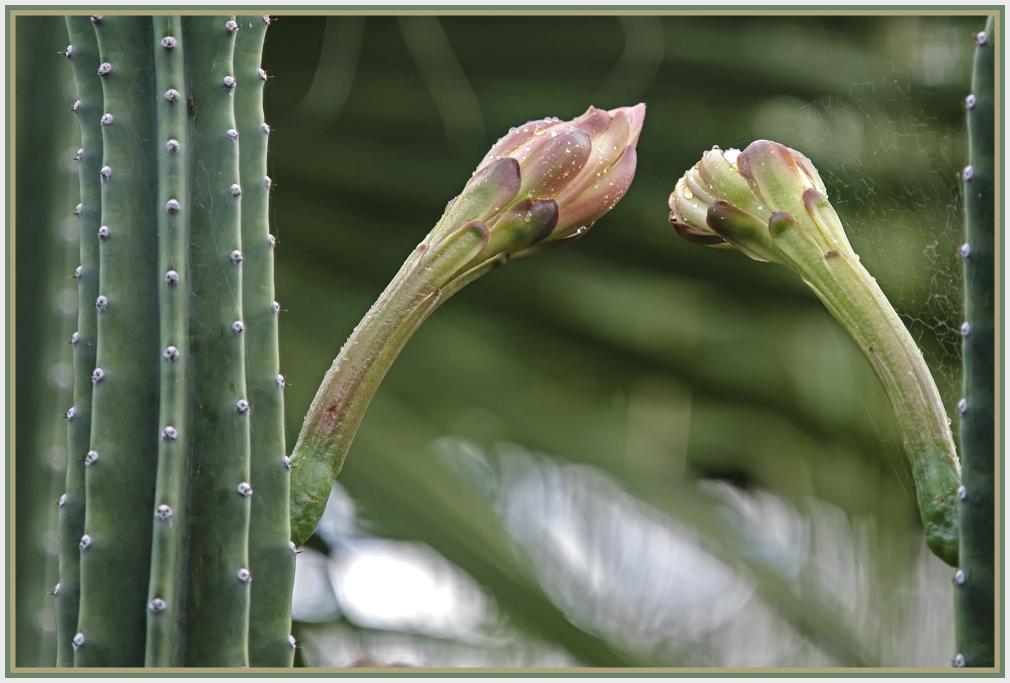 big cactus flower to big cactus flower