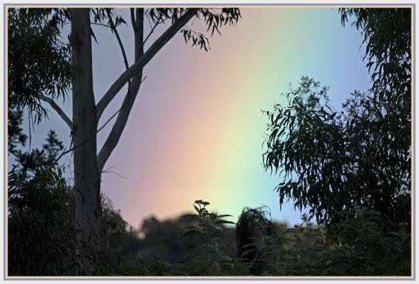 Rainbow behind trees