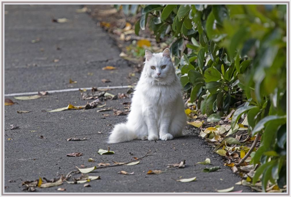 Furry white cat