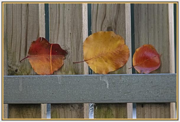 leaves in lock down