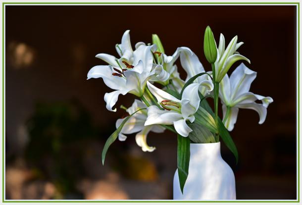white lily in white vase