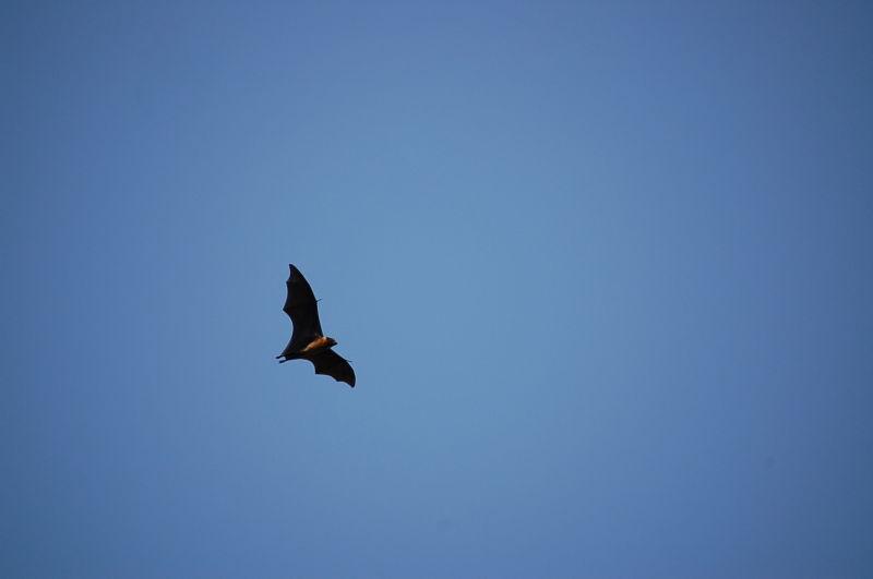 "The Bat ""Mobile"""
