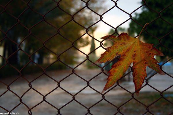 Lone Autumn Leaf
