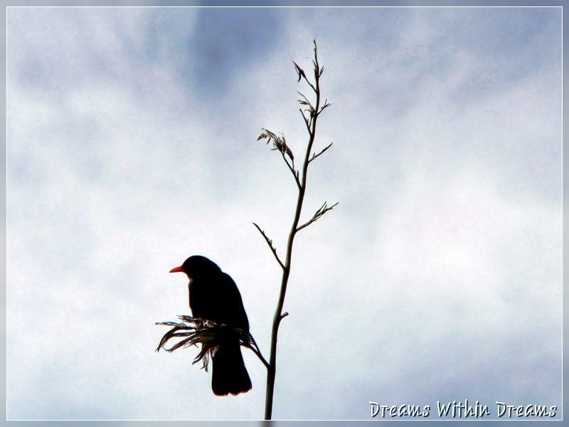 Blackbird Zen.