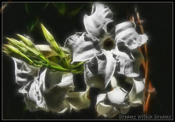 white flower, vine.