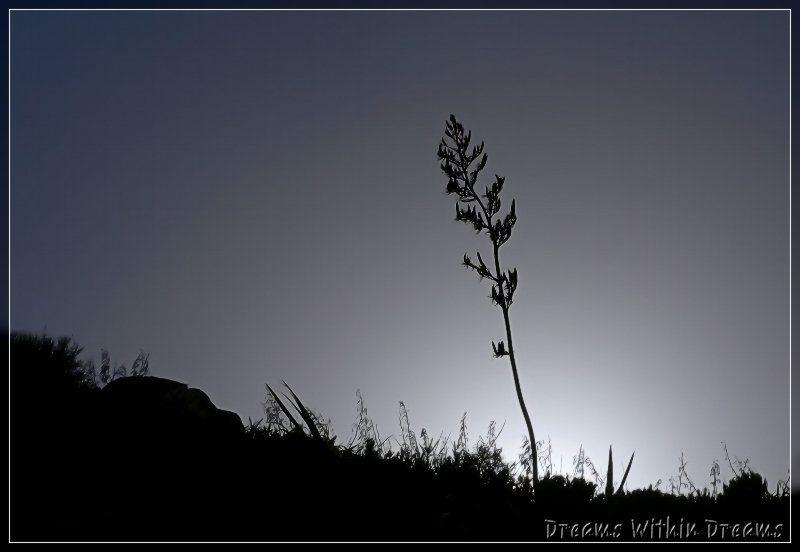 Flax Silhouette