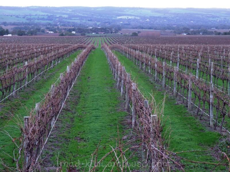 Winter Vines