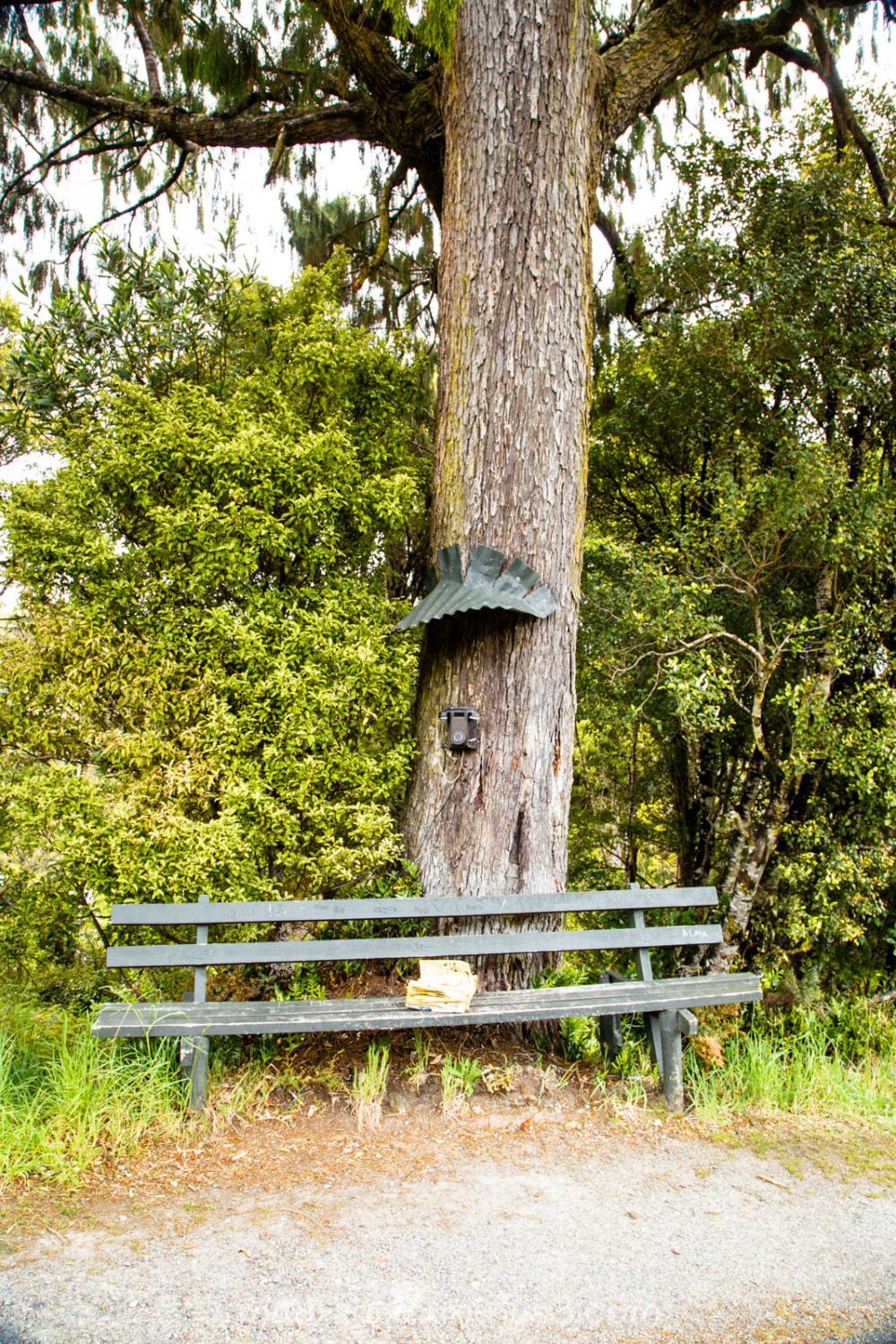 Tree Phone I