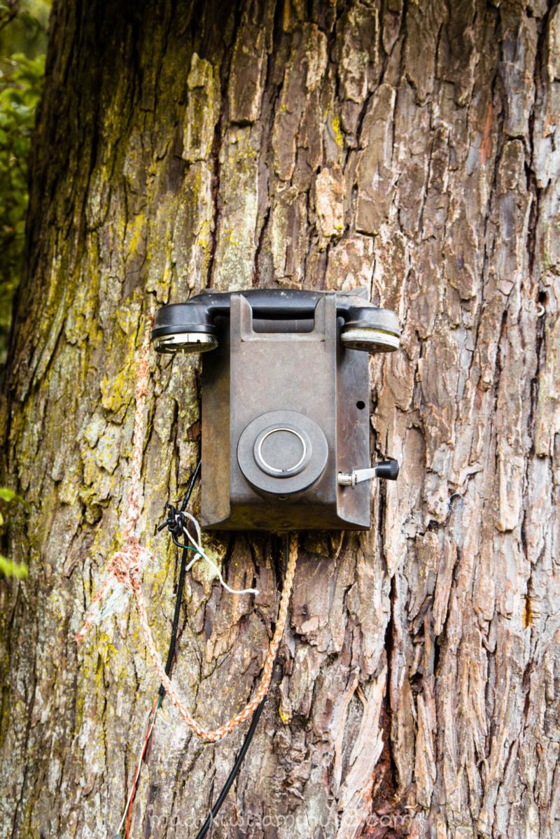 Tree Phone II