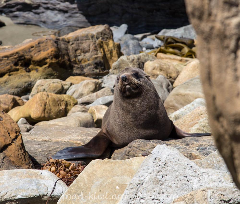 Seal III
