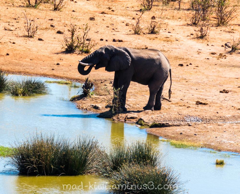Elephant Drinking II