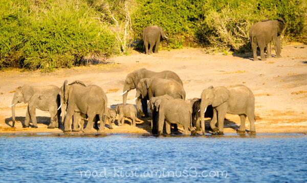 Elephants V