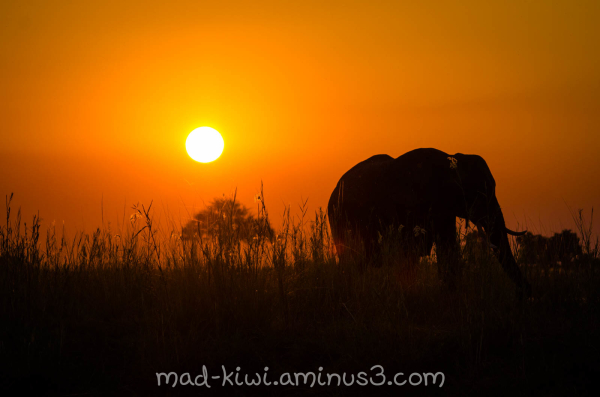 Elephant Sunset I