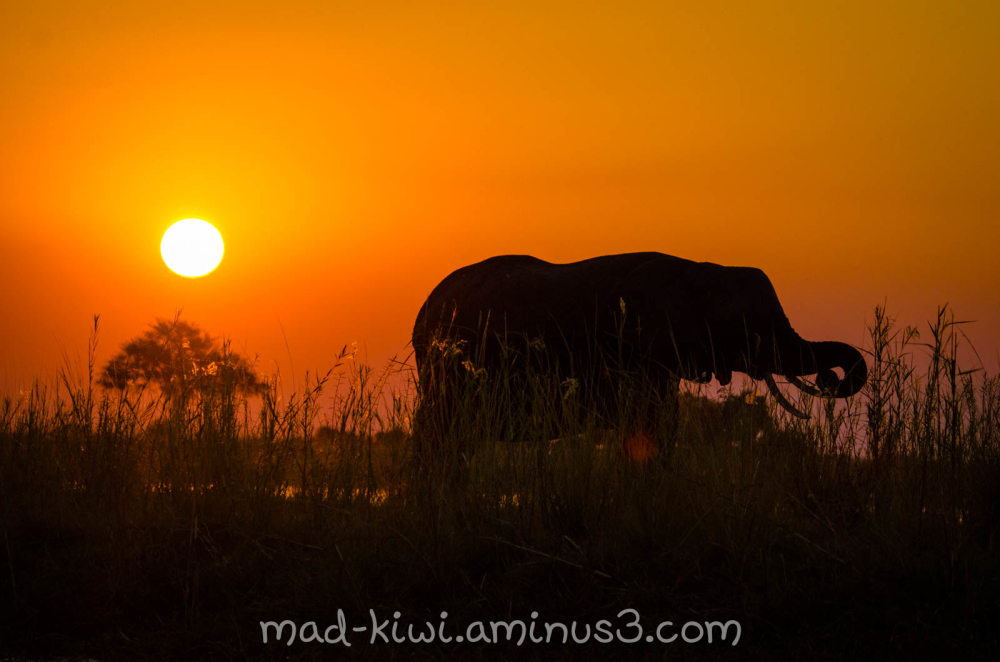 Elephant Sunset II