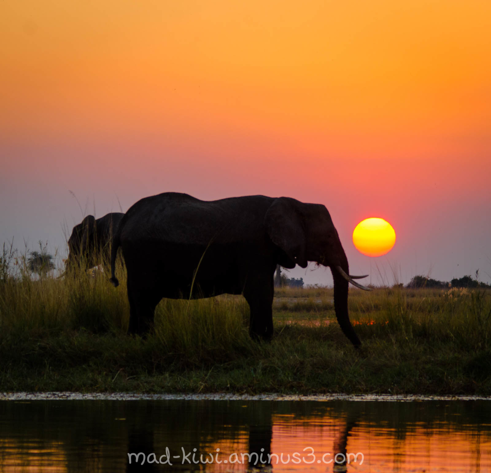 Elephant Sunset III