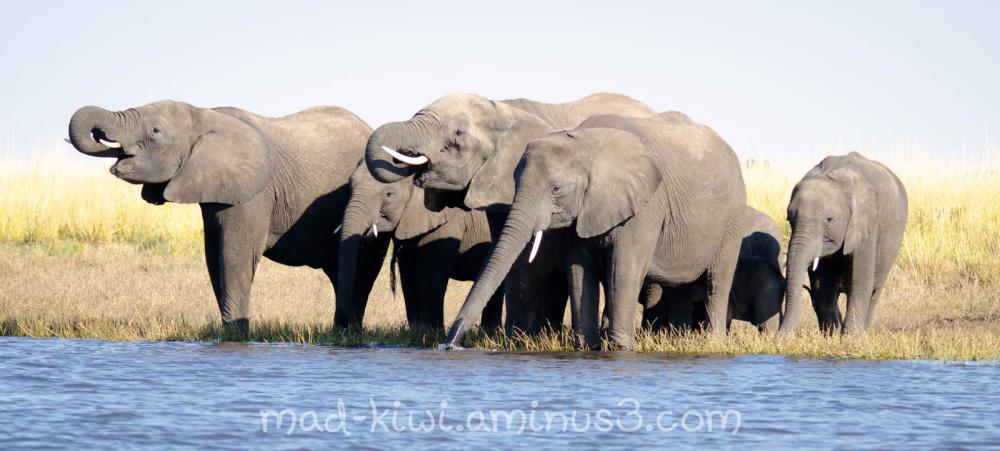 Elephants X