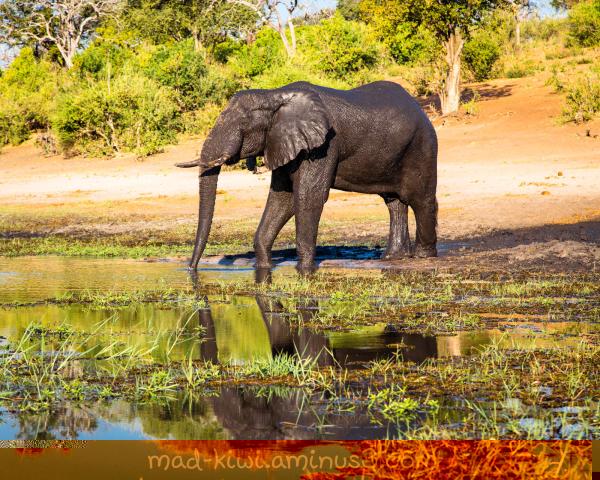Elephant XIV