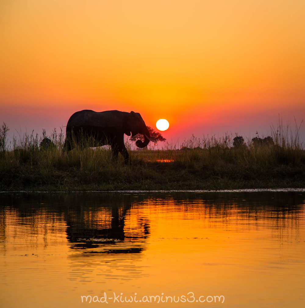 Elephant Sunset VI
