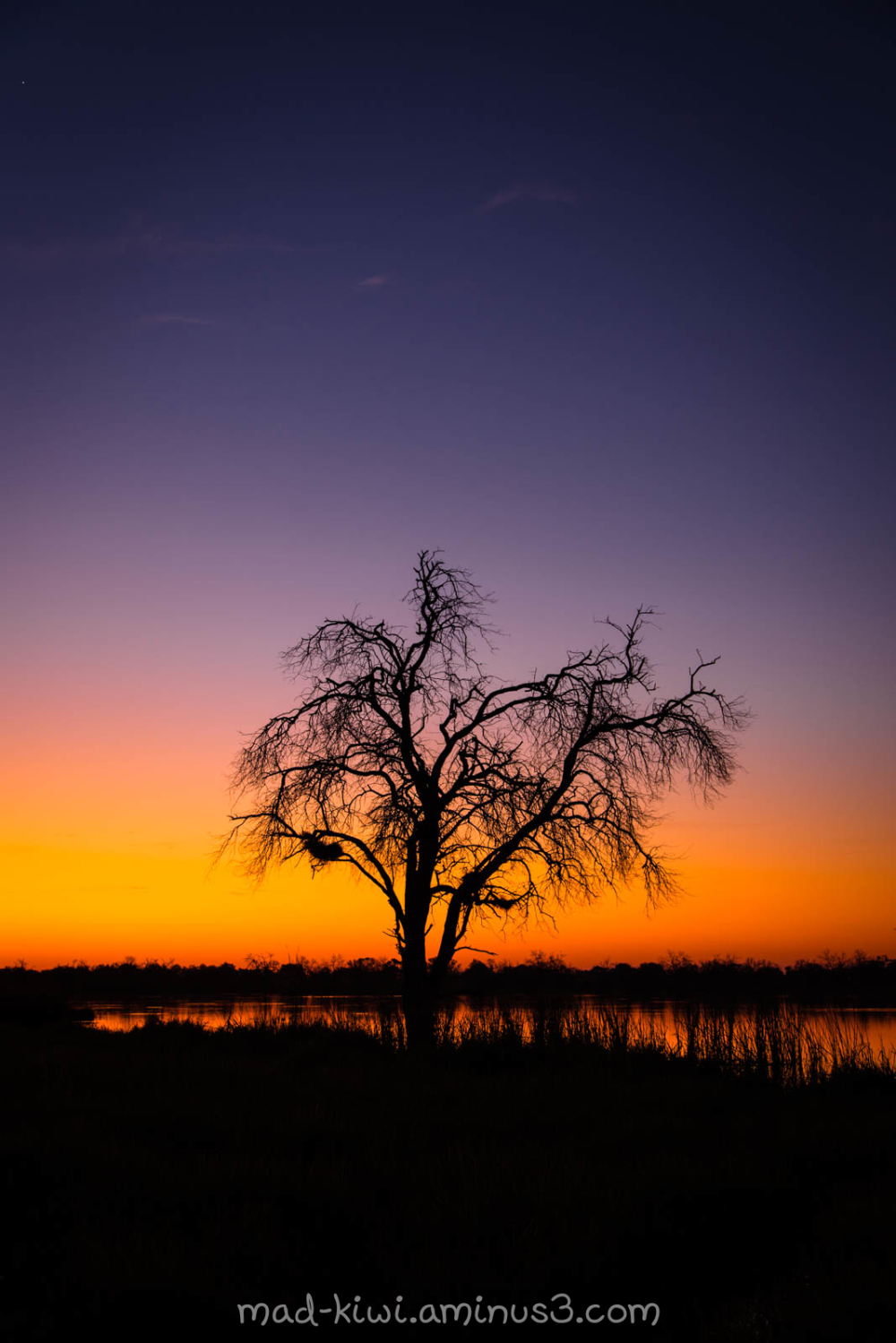 Khwai Sunset V