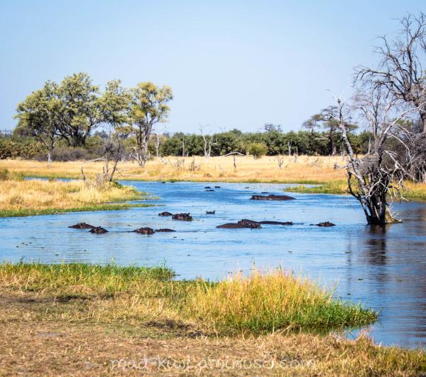 Hippos I