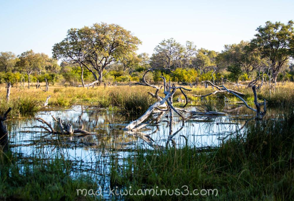 Marsh Lands