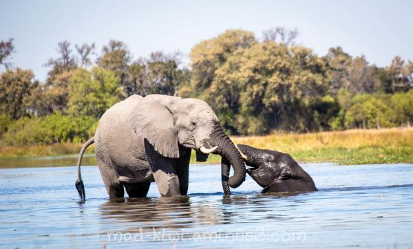 Elephants XVI