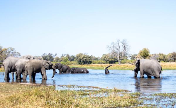 Elephants XXI