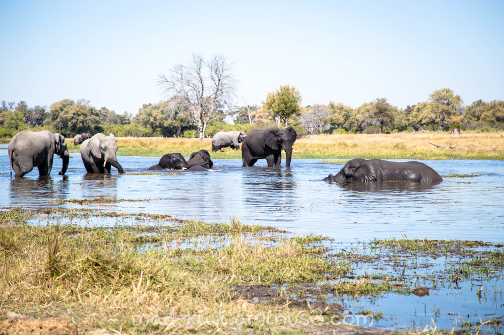 Elephants XXIII