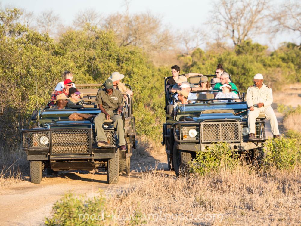 Safari Goers