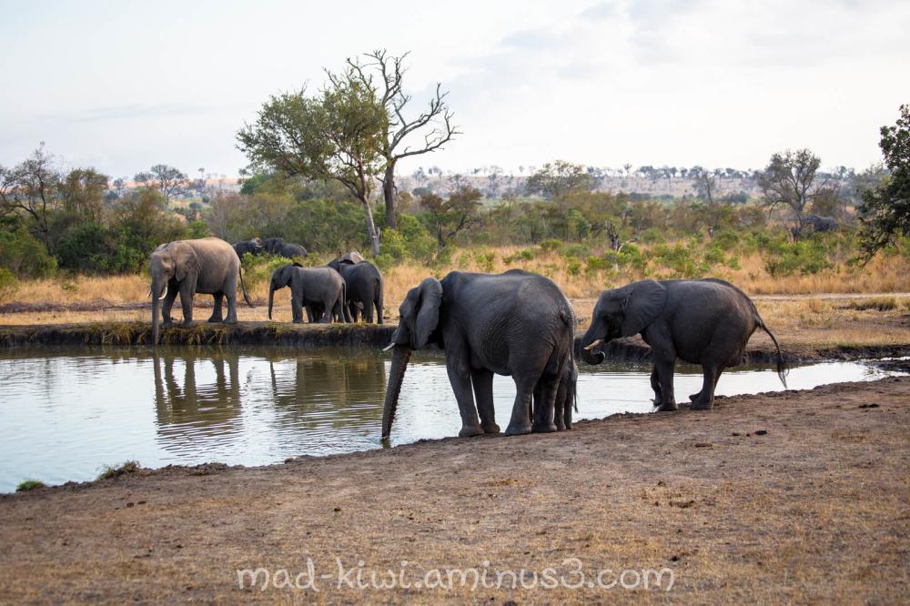 Elephants XXVII