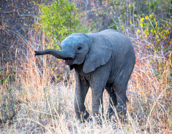 Elephant XXIV